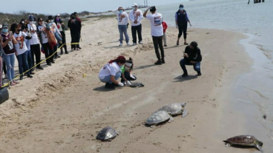 Liberan tortugas verdes en el litoral del Puerto El Mezquital en Matamoros