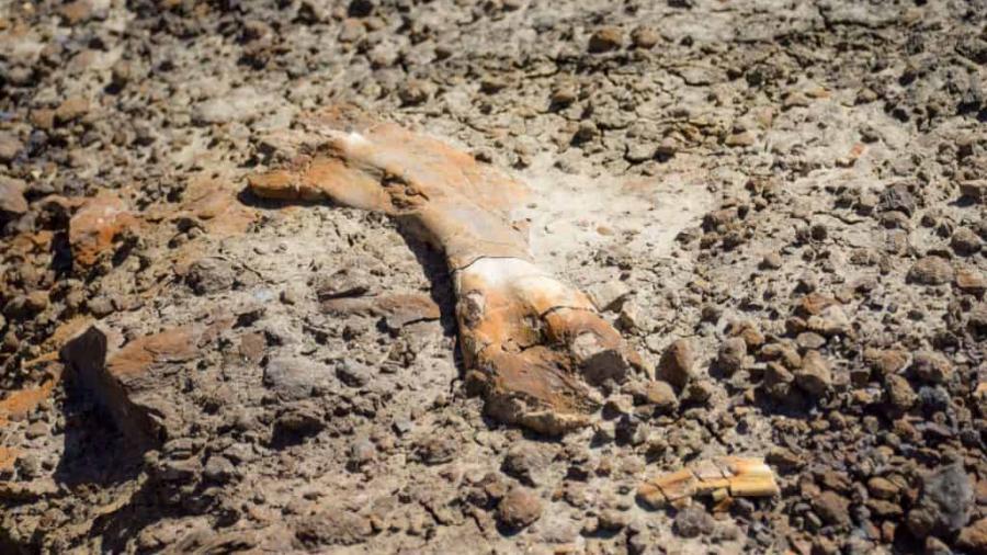 Niño descubre huesos de dinosaurio en Canadá