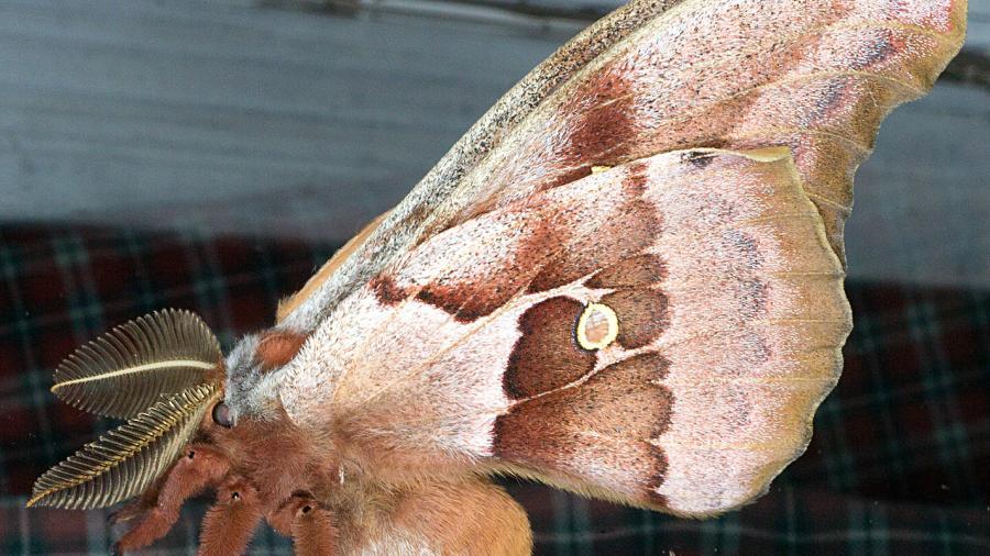 NotiGAPE - Causa terror la 'tarántula con alas' en redes sociales